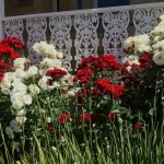 moar roses!