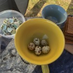quail eggs entee