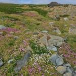 stokes point flower carpet