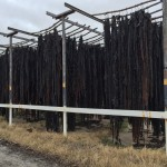 kelp drying racks