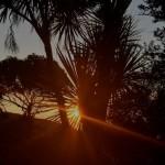 sun through palm
