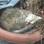 puss in a basket