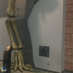 leg of supersaurus!