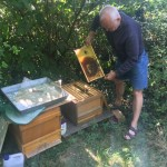 inspecting the spare hive