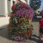pretty flowers & street child