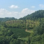 the vineyards across the hill