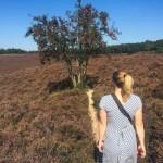 boke in the heather