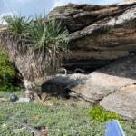 plaque cave